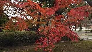 20151228東寺(その11)