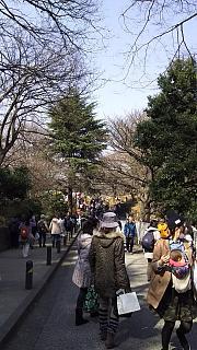 20160228大倉山梅林祭(その4)