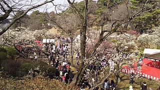 20160228大倉山梅林祭(その5)