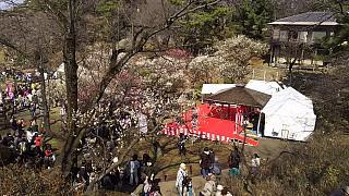 20160228大倉山梅林祭(その6)