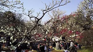 20160228大倉山梅林祭(その8)