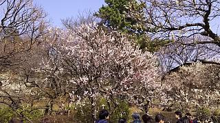 20160228大倉山梅林祭(その10)