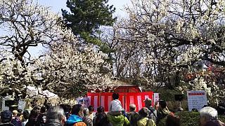 20160228大倉山梅林祭(その11)