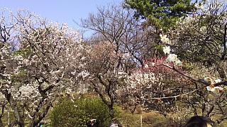 20160228大倉山梅林祭(その12)