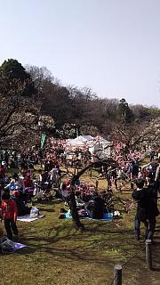 20160228大倉山梅林祭(その15)