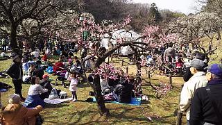 20160228大倉山梅林祭(その16)