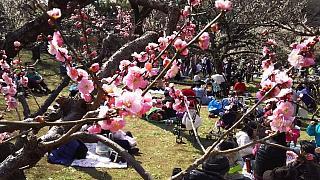 20160228大倉山梅林祭(その17)