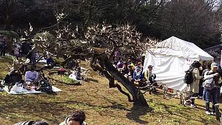 20160228大倉山梅林祭(その21)