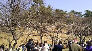 20160228大倉山梅林祭(その23)