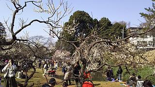 20160228大倉山梅林祭(その24)