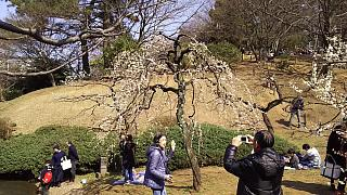 20160228大倉山梅林祭(その25)
