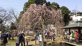 20160228大倉山梅林祭(その30)