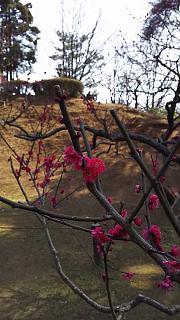 20160228大倉山梅林祭(その38)