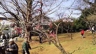 20160228大倉山梅林祭(その43)