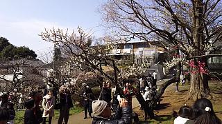 20160228大倉山梅林祭(その44)