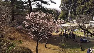 20160228大倉山梅林祭(その45)