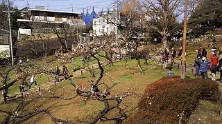 20160228大倉山梅林祭(その46)