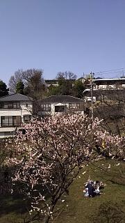 20160228大倉山梅林祭(その47)