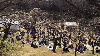 20160228大倉山梅林祭(その48)