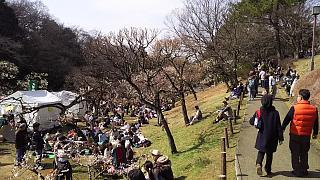 20160228大倉山梅林祭(その52)