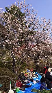 20160228大倉山梅林祭(その54)