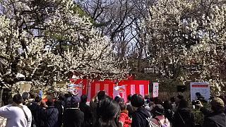 20160228大倉山梅林祭(その55)
