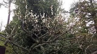 20160318二条城(その13)