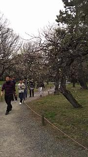 20160318二条城(その21)