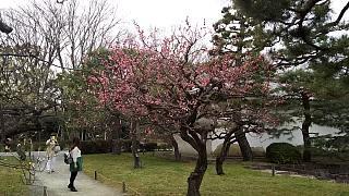 20160318二条城(その22)