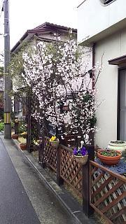 20160319野田池(その8)