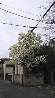 20160319お花