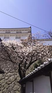 20160322姫路城(その1)