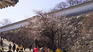 20160322姫路城(その8)