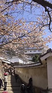 20160322姫路城(その11)