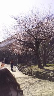 20160322姫路城周囲(その4)