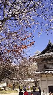 20160322姫路城周囲(その6)