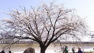20160322姫路城周囲(その18)