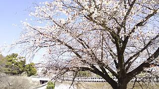 20160322姫路城周囲(その21)