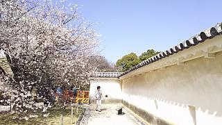 20160322姫路城周囲(その25)