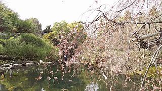 20160322好古園(その18)