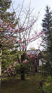 20160322好古園(その28)