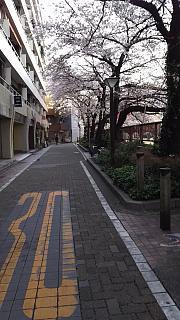 20130331目黒川(その3)