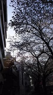 20130331目黒川(その4)