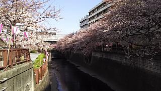 20130331目黒川(その5)