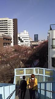 20130331目黒川(その6)