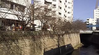 20130331目黒川(その7)