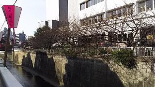 20130331目黒川(その8)