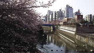 20130331目黒川(その9)