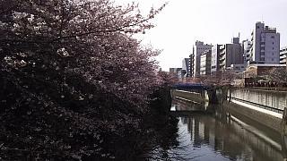 20130331目黒川(その10)