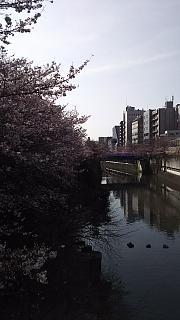 20130331目黒川(その11)